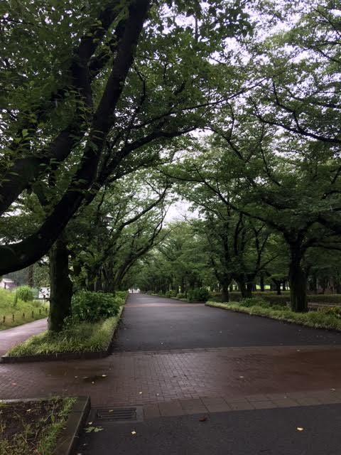 f:id:cnokichi:20190812152620j:plain