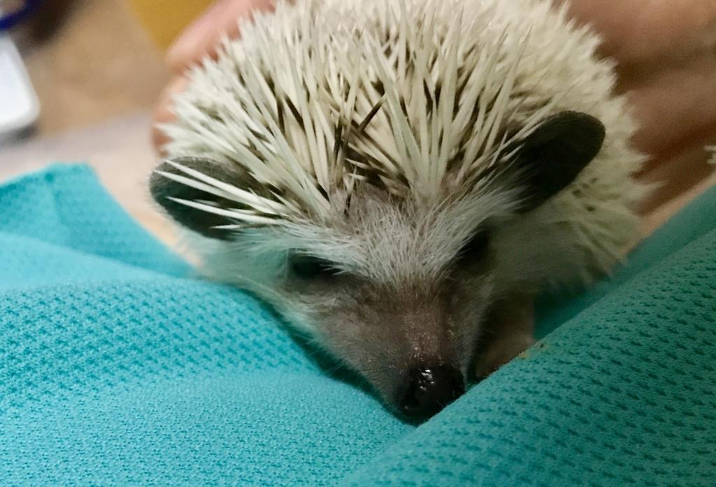 f:id:co-hedgehog:20170524202921j:plain