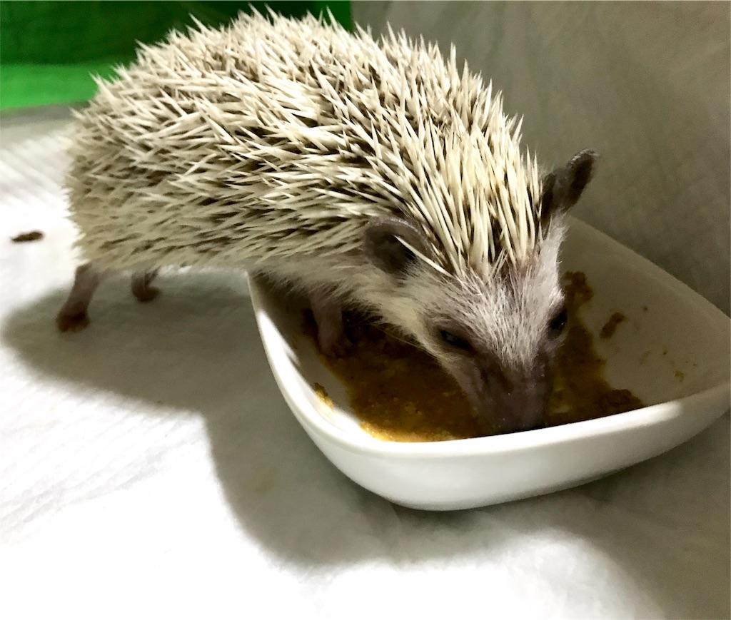 f:id:co-hedgehog:20170526173514j:image