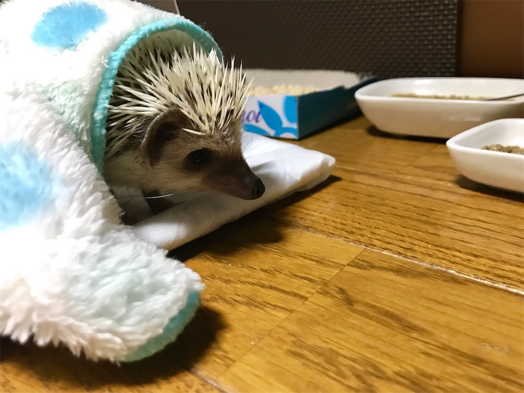 f:id:co-hedgehog:20170605200825j:image