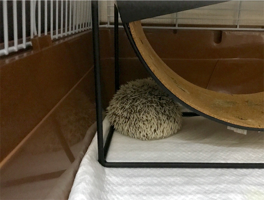f:id:co-hedgehog:20170614220258j:image