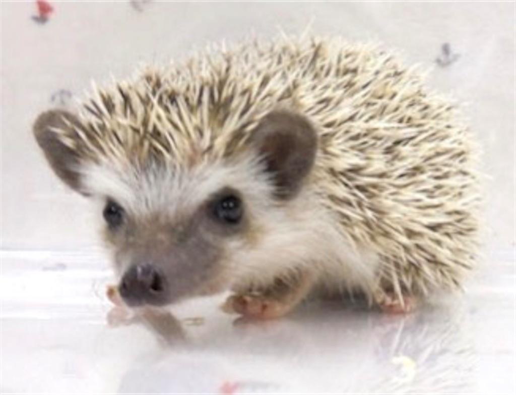 f:id:co-hedgehog:20170615192544j:image