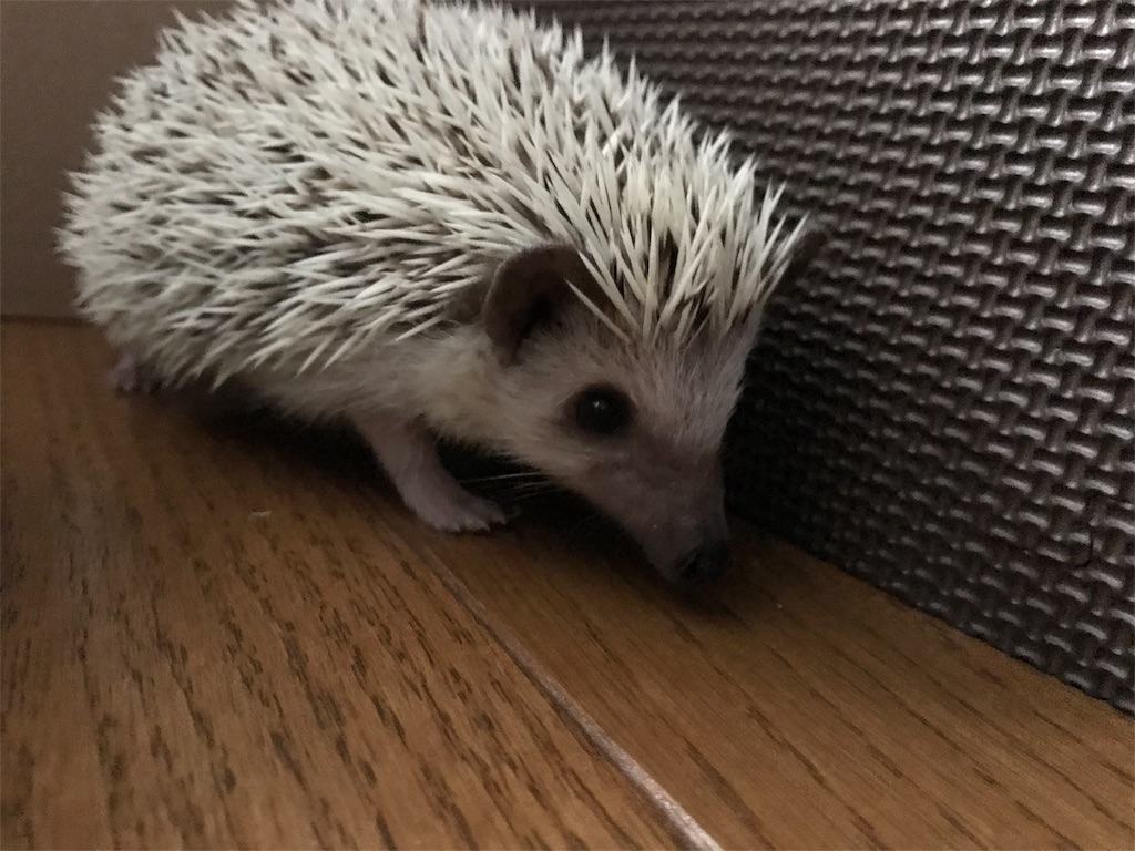 f:id:co-hedgehog:20170615192559j:image