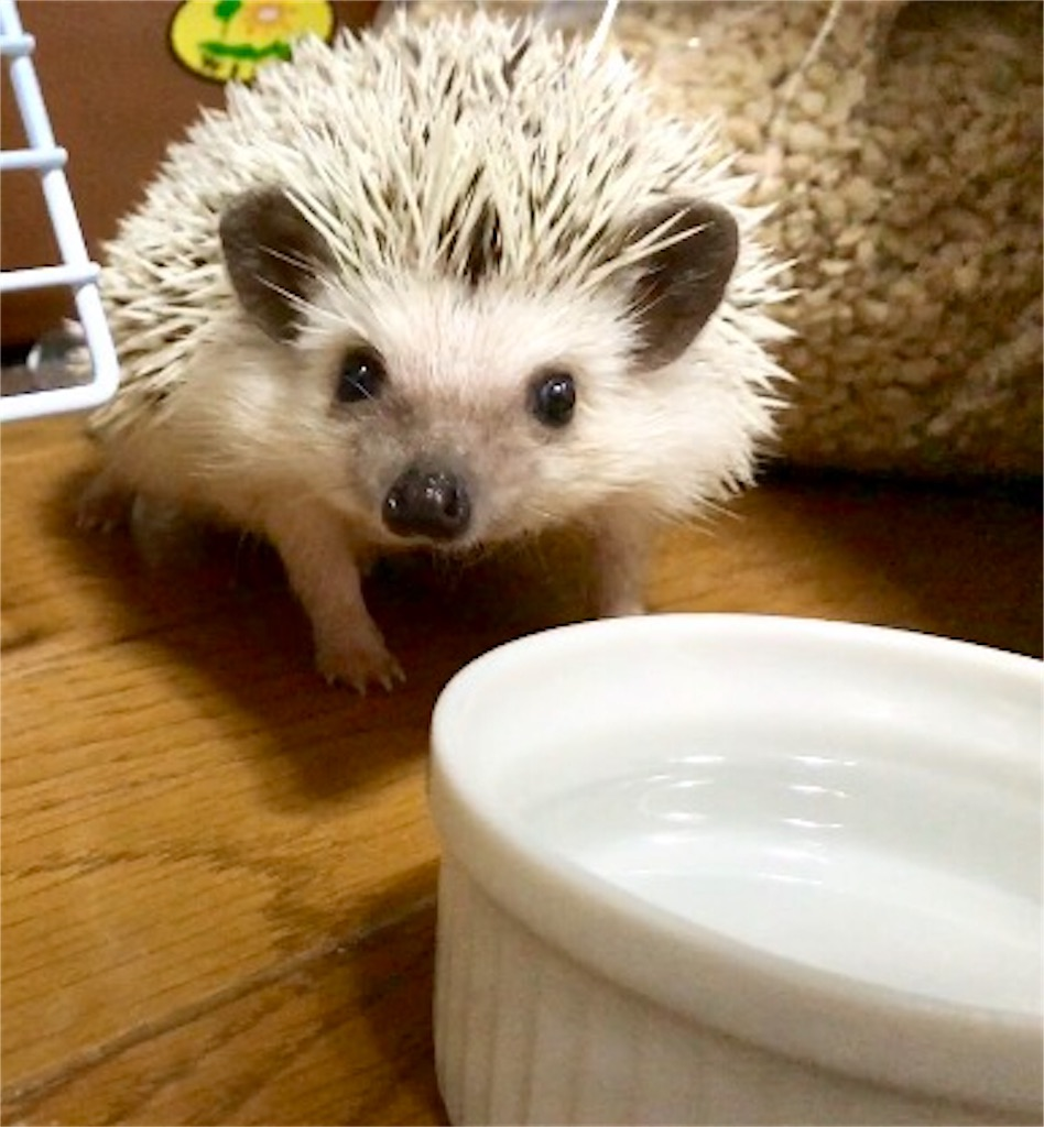f:id:co-hedgehog:20170623212100j:image