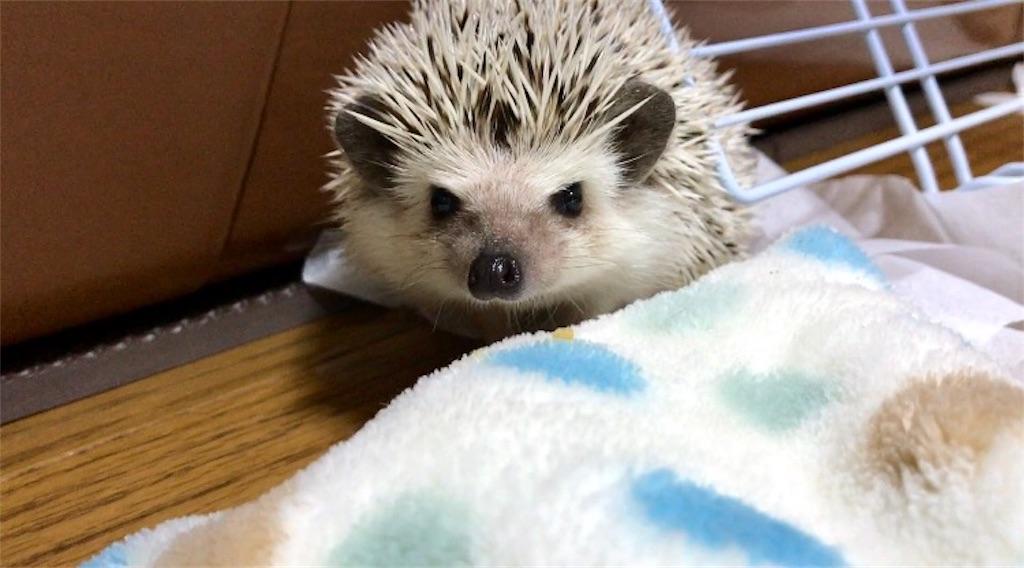 f:id:co-hedgehog:20170626230301j:image