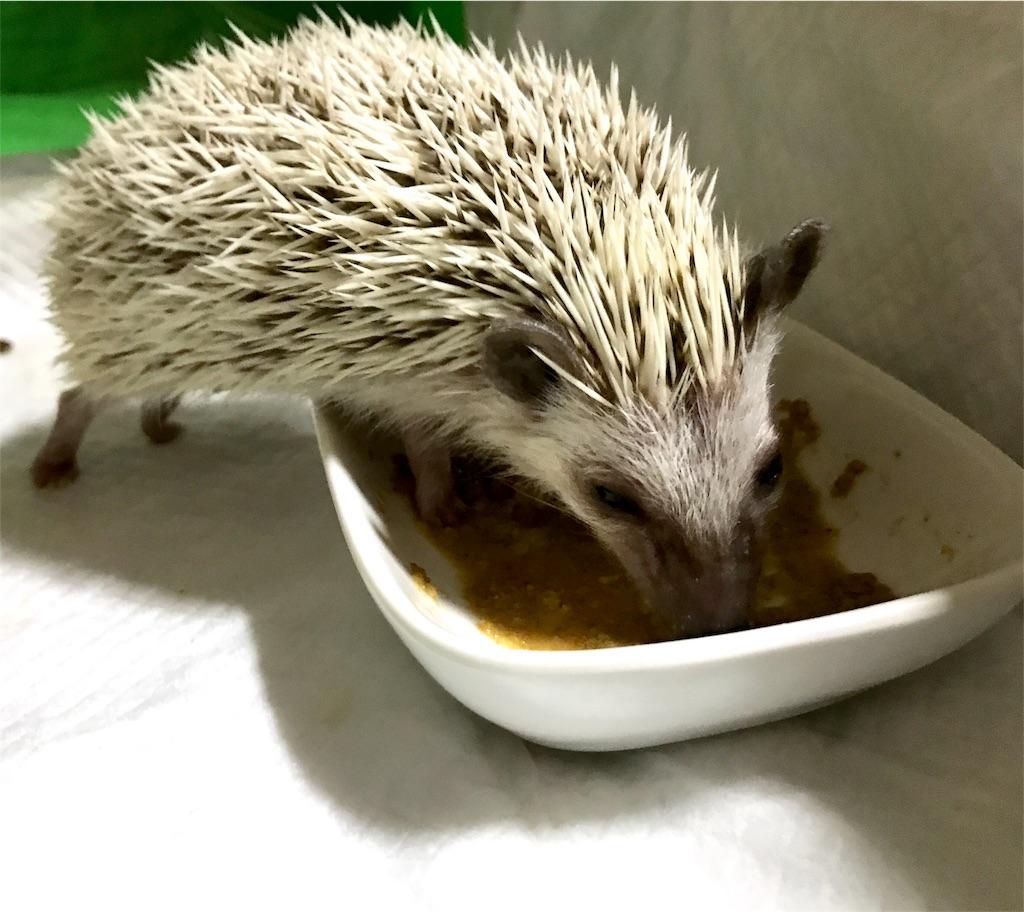 f:id:co-hedgehog:20170701073452j:image
