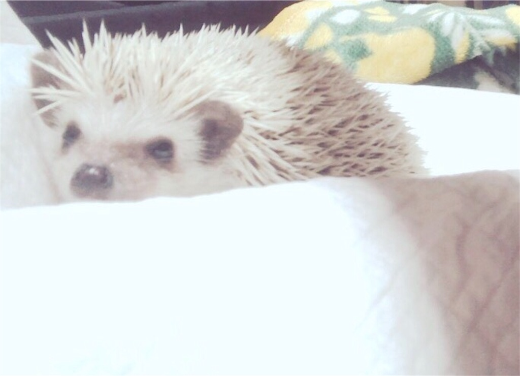 f:id:co-hedgehog:20170701073620j:image