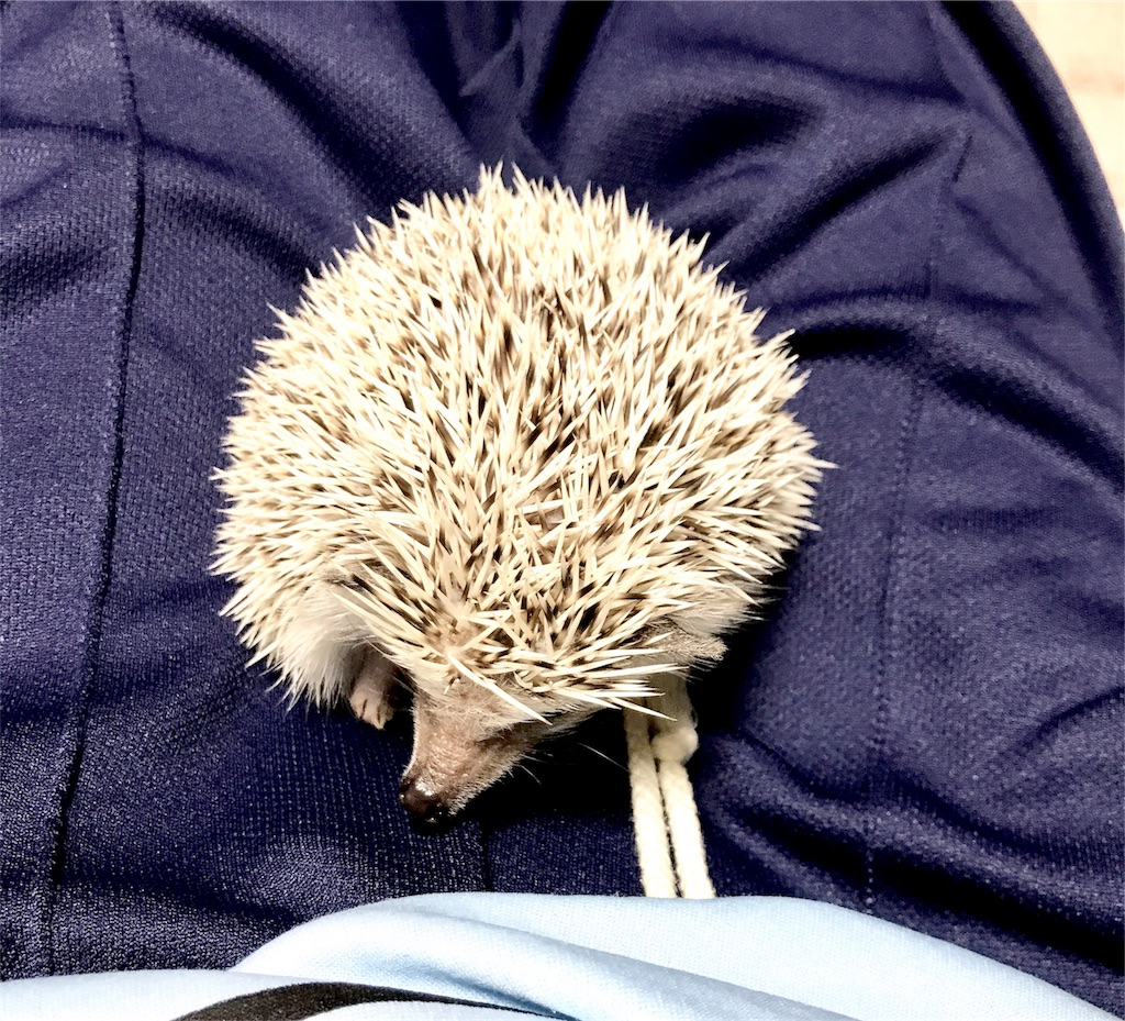 f:id:co-hedgehog:20170701073838j:image