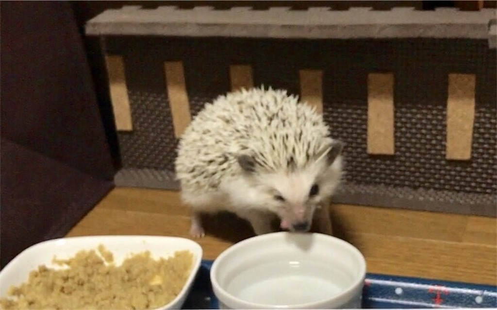 f:id:co-hedgehog:20170701074821j:image