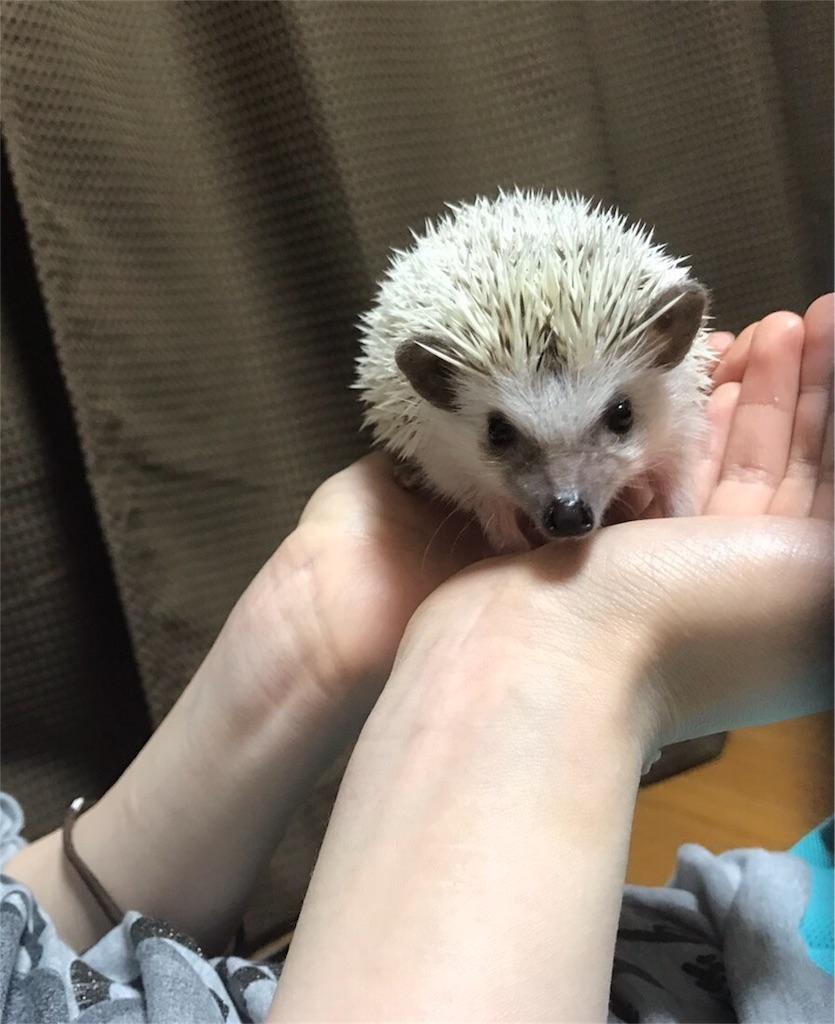 f:id:co-hedgehog:20170701075019j:image