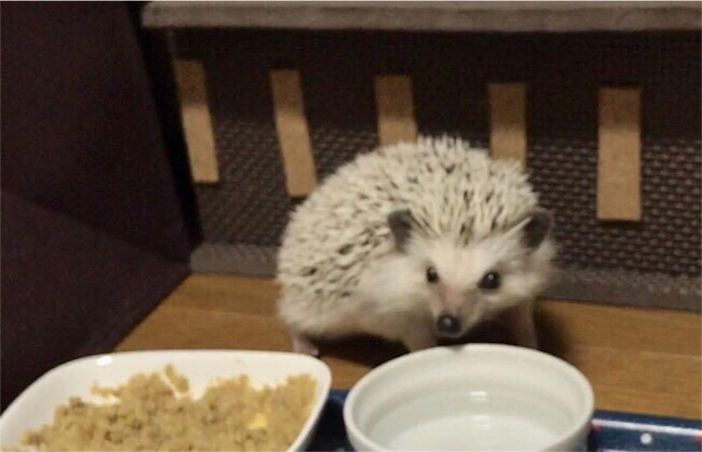 f:id:co-hedgehog:20170701075126j:image