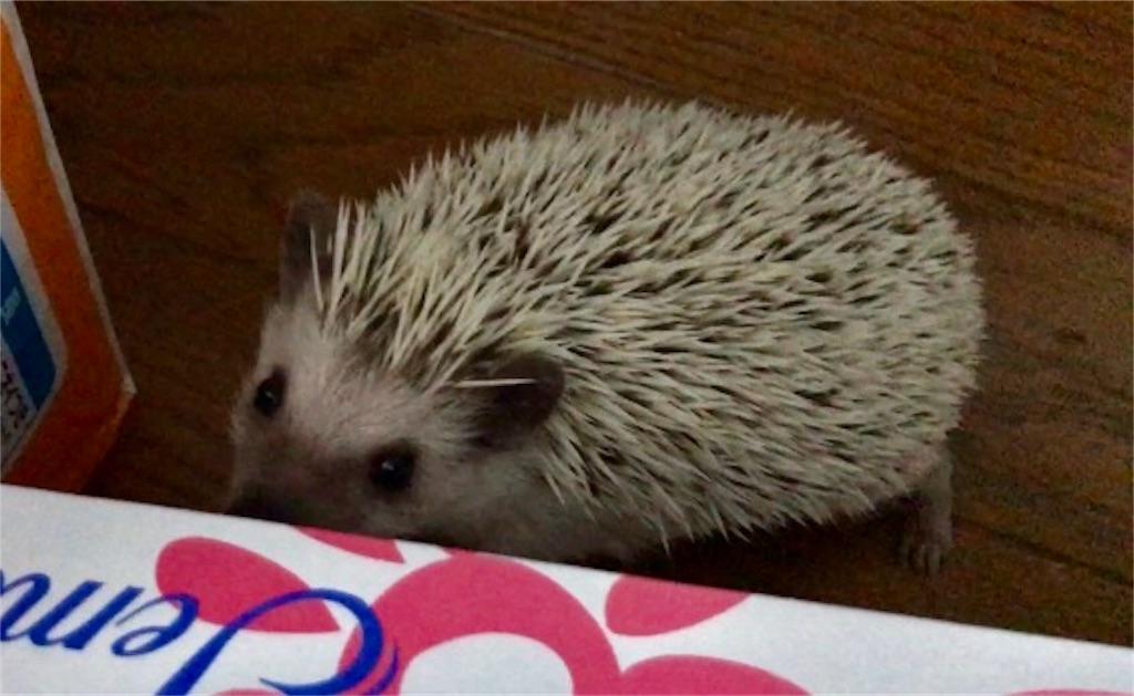 f:id:co-hedgehog:20170702131000j:image