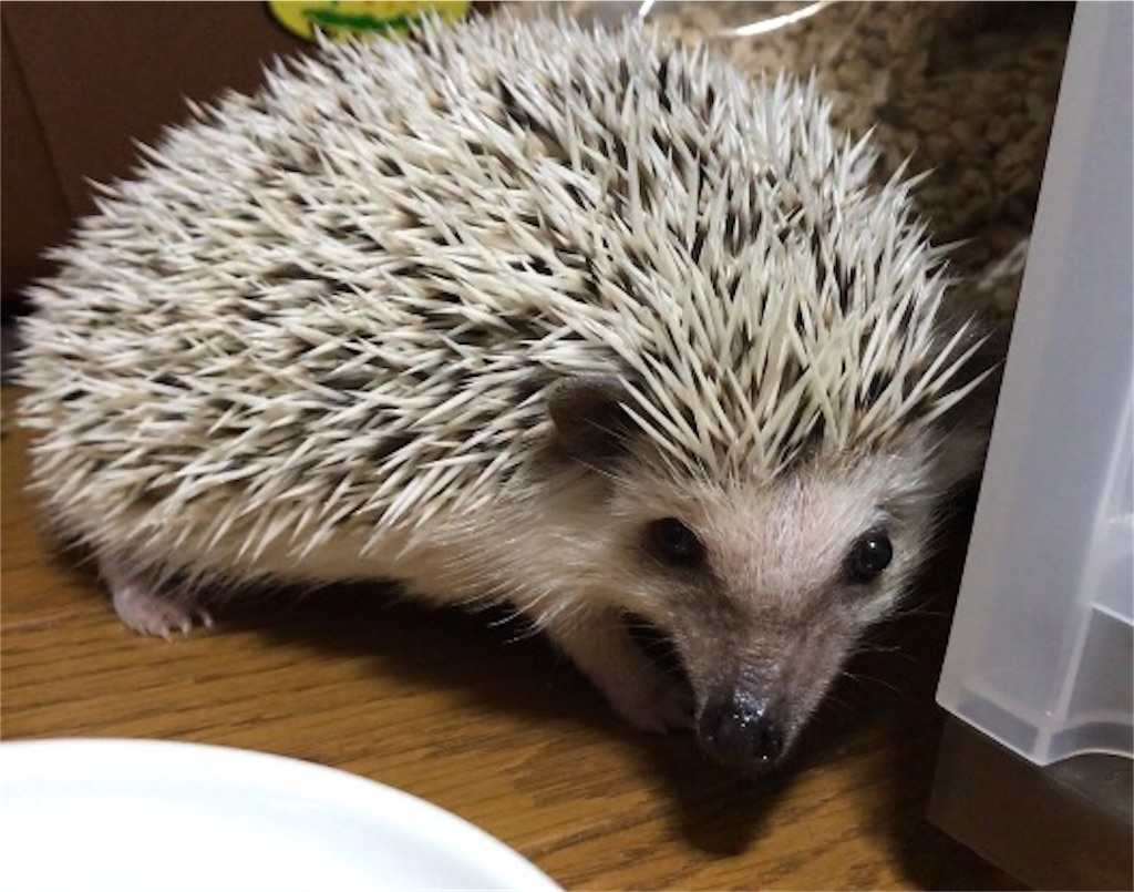 f:id:co-hedgehog:20170702131036j:image