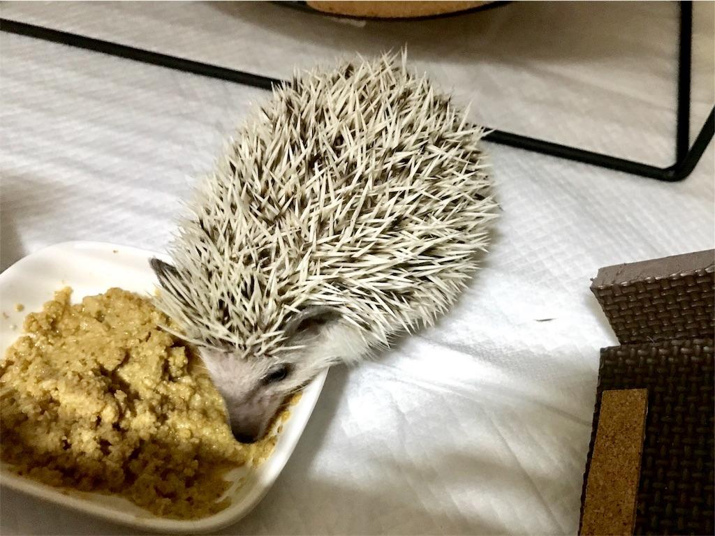 f:id:co-hedgehog:20170702131055j:image
