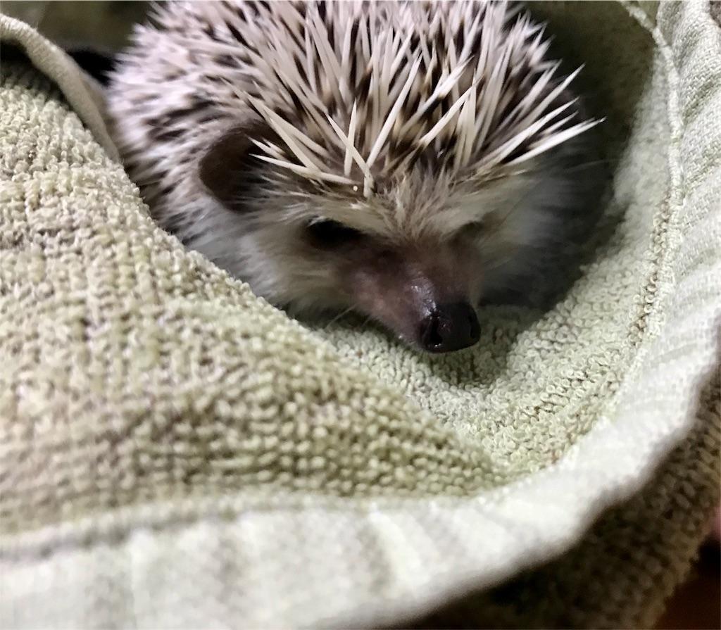 f:id:co-hedgehog:20170703181812j:image