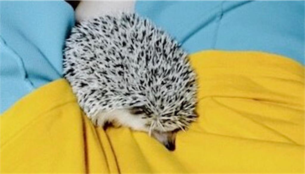 f:id:co-hedgehog:20170703181833j:image