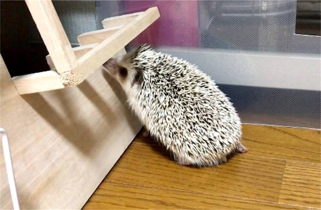 f:id:co-hedgehog:20170707091841j:image