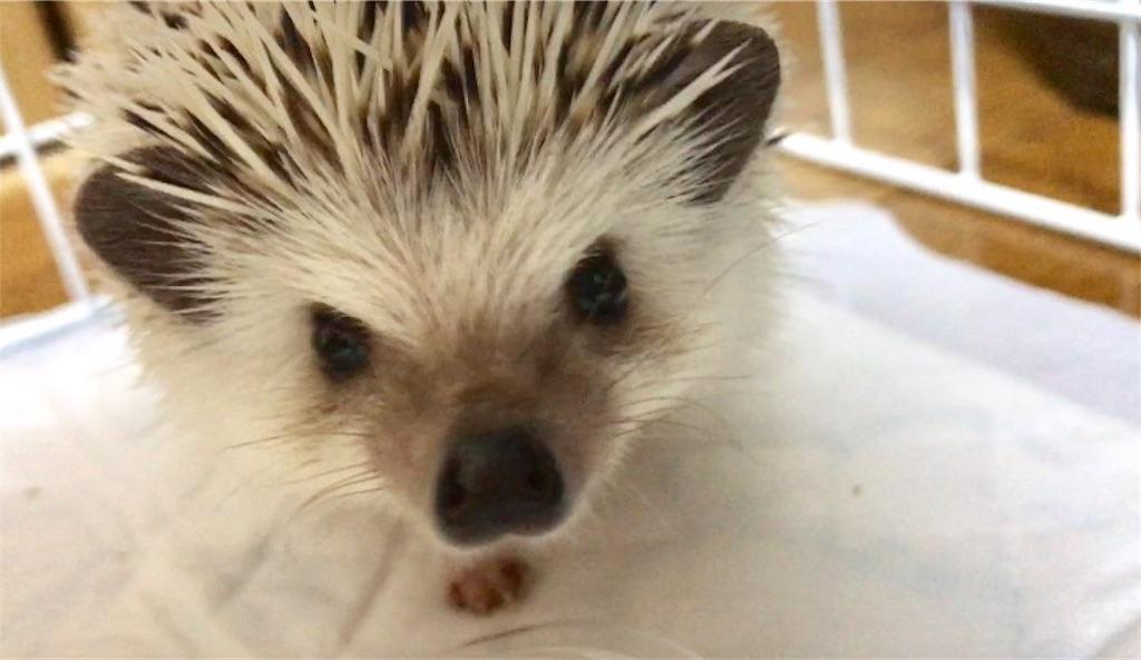f:id:co-hedgehog:20170711202703j:image