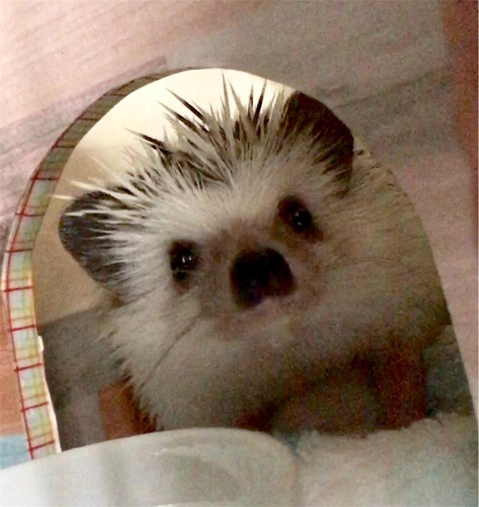 f:id:co-hedgehog:20170730093501j:image