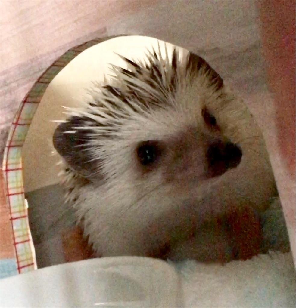 f:id:co-hedgehog:20170730093523j:image