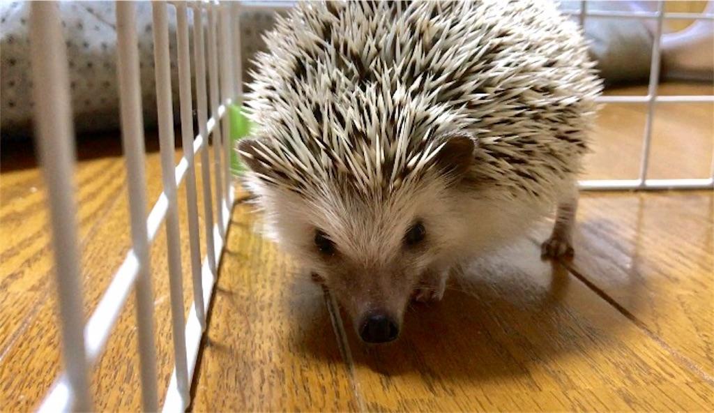 f:id:co-hedgehog:20170730093540j:image