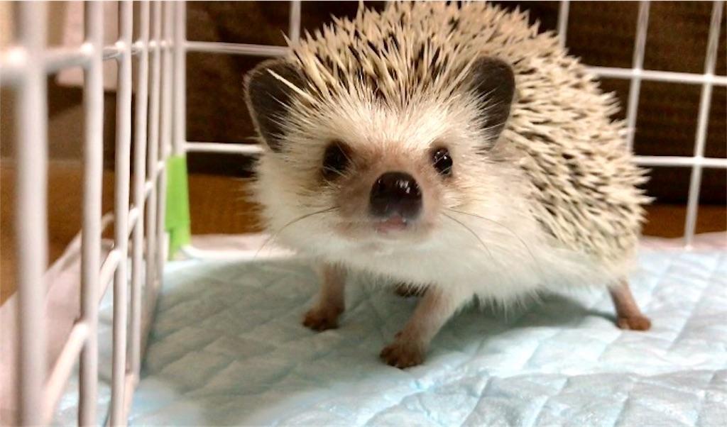 f:id:co-hedgehog:20170731201212j:image