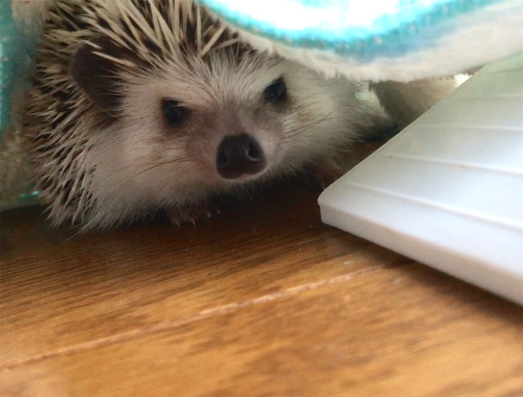 f:id:co-hedgehog:20170806202637j:image