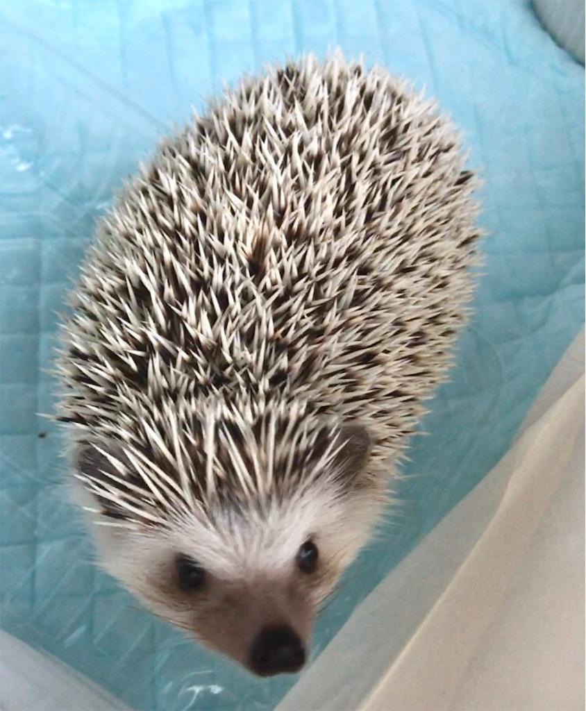 f:id:co-hedgehog:20170811184732j:image