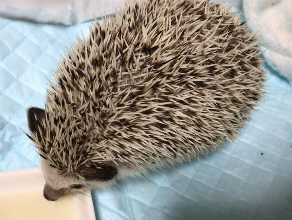 f:id:co-hedgehog:20170901084804j:image
