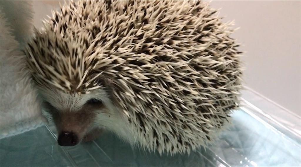 f:id:co-hedgehog:20170915071445j:image