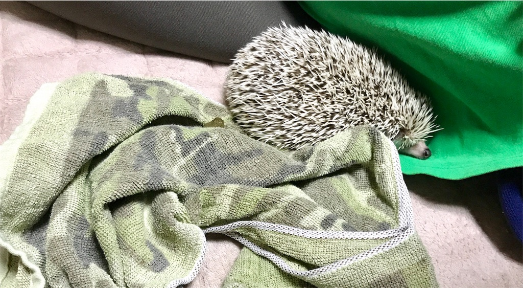 f:id:co-hedgehog:20171003072425j:image