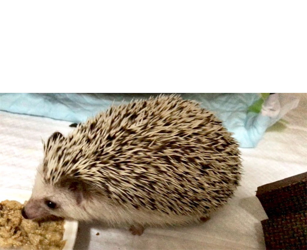 f:id:co-hedgehog:20171008071532j:image
