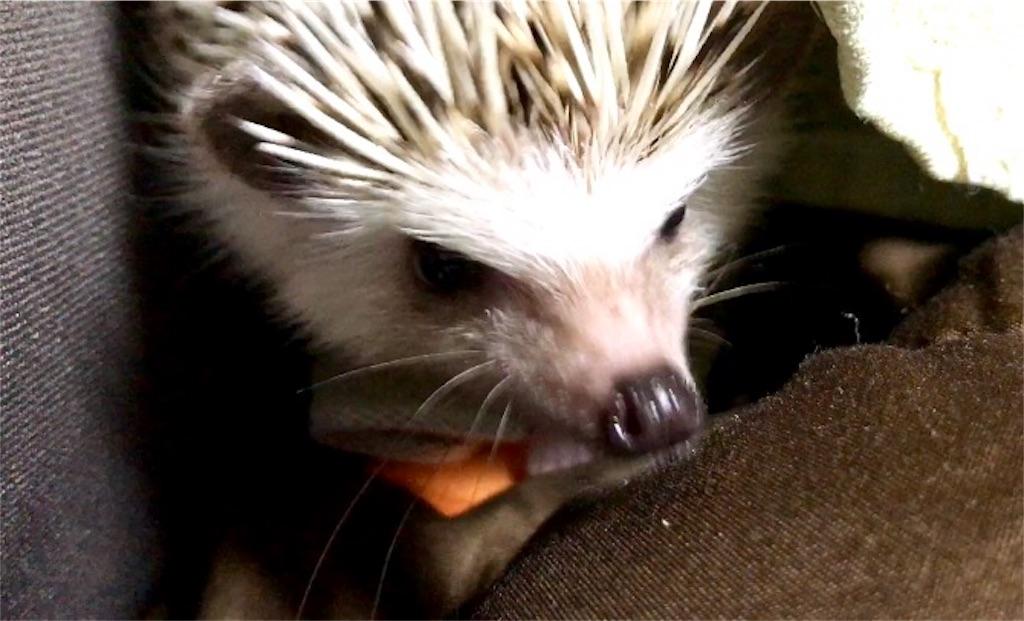f:id:co-hedgehog:20171025180041j:image