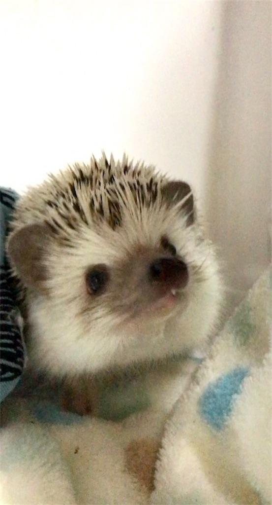 f:id:co-hedgehog:20180202110003j:image