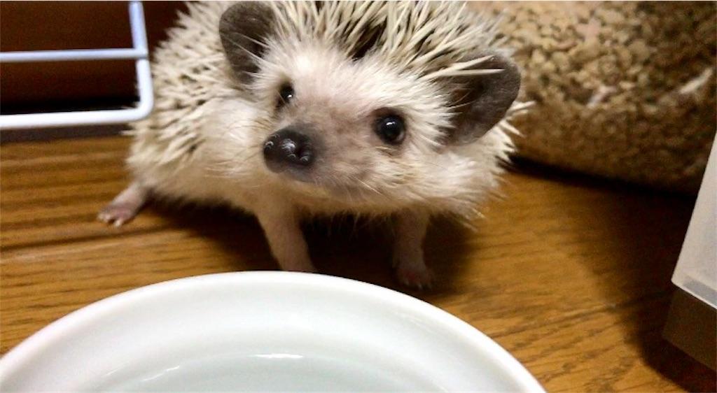 f:id:co-hedgehog:20180515172243j:image