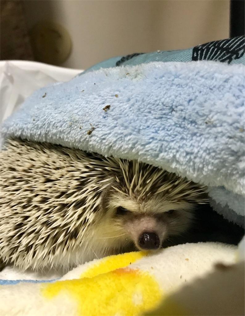f:id:co-hedgehog:20180515172751j:image