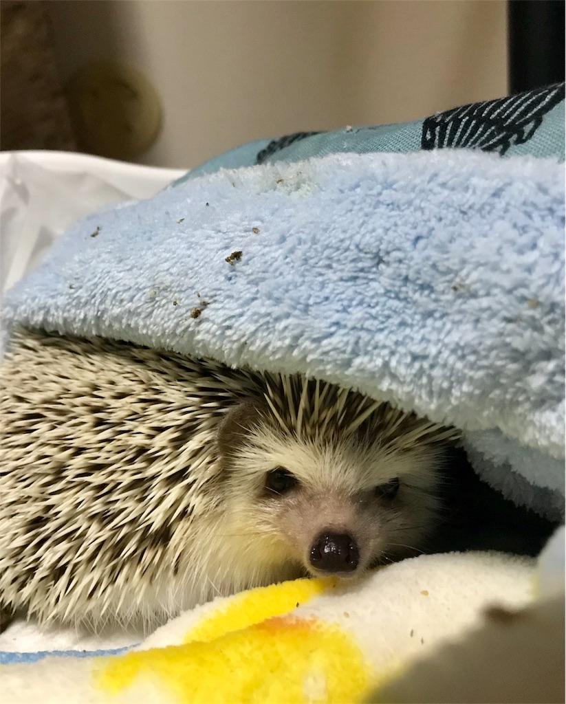 f:id:co-hedgehog:20180515172800j:image