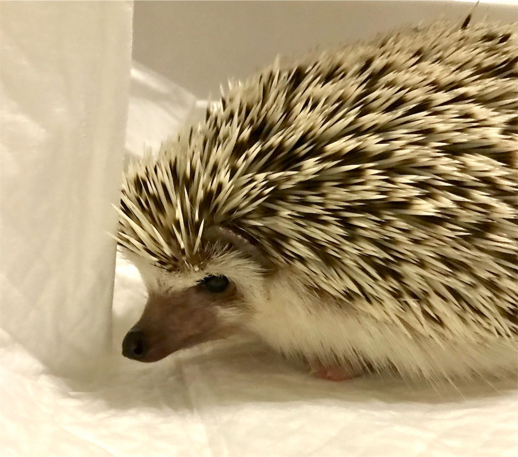 f:id:co-hedgehog:20190105203345j:image