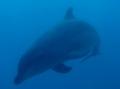 [生物][水中][イルカ]海中で