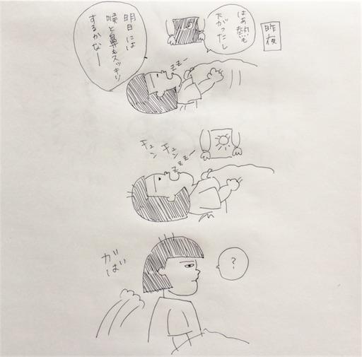 f:id:cochimi-cochimi:20170616141711j:image