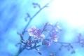 河津桜が咲きました(^^)