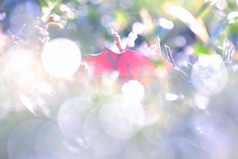 秋の忘れ物