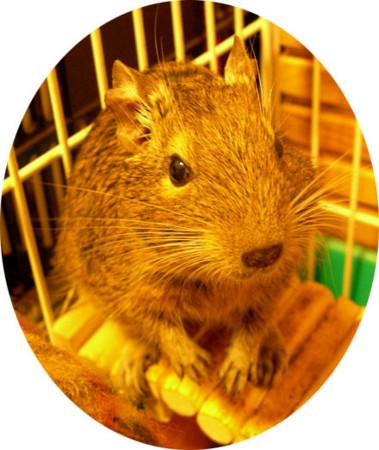 f:id:cocoanuts:20090218202043j:image
