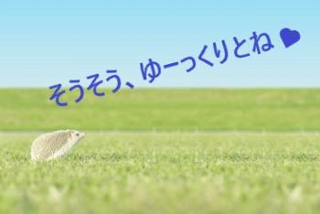 草原を歩くハリネズミと青空