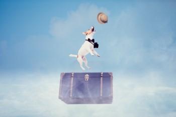 青空に飛ぶ旅行鞄と犬と麦わら帽子