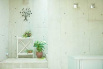 白くシンプルな明るい部屋にいくつかの観葉植物