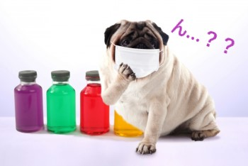 色とりどりの瓶とマスクをした犬