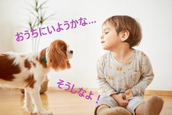 リビングで犬とお話している男の子