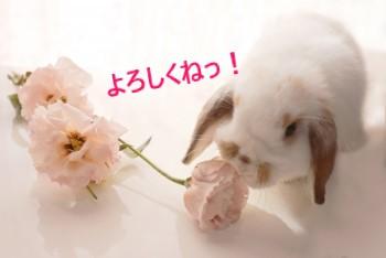 ピンクの花と垂れ耳うさぎ
