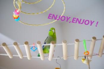 はしごで遊ぶ鳥